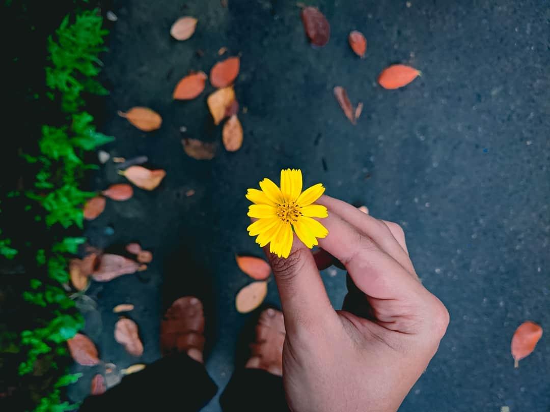 A hand holding a flower